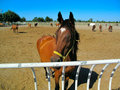 Horses in Stud Farm Stock Photos