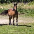 Horses in suwalki landscape park poland Royalty Free Stock Photography