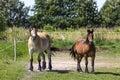 Horses in suwalki landscape park poland Stock Photo