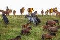 Terrified horses flee over hill Royalty Free Stock Photo