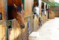 Horses in their stalls a riding stables Royalty Free Stock Photo