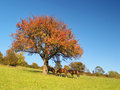 Horses under tree at late evening Royalty Free Stock Photos