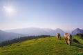 Horses in Urkiola mountains Royalty Free Stock Photo