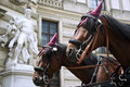 Horses in Vienna Royalty Free Stock Photos