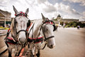 Horses in Vienna, Austria Stock Photography