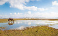 Horses in the wetlands drinking horse reflected a mirror smooth water surface Stock Image