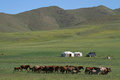 Horses and yurts in the mongolian steppe