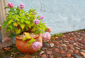 Hortensia in the flower pot Stock Images