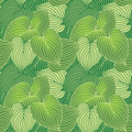 Hosta Pattern_Green Stock Photo