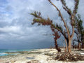 Hostile Beach Trees Stock Image