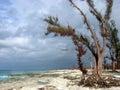 Hostile Beach Trees Stock Image