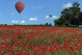 Hot air balloon poppy field england ballons drifting over a colorful of poppies in the yorkshire countryside in northeast Royalty Free Stock Images