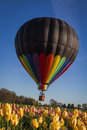 Hot air balloon ride over the tulips Royalty Free Stock Photo