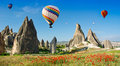 Hot air balloons flying over a field of poppies, Cappadocia, Turkey Royalty Free Stock Photo