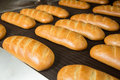 Hot baked breads on a line fresh bread loafs the production Stock Photography
