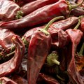 Hot dried red chillies peppers, close up image Royalty Free Stock Photo