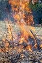 Hot fire while burning brush Royalty Free Stock Photo