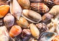 Hot orange sea shells background. Small shells closeup. Sea shell banner template. Royalty Free Stock Photo