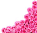 Hot pink roses over white background border Stock Image
