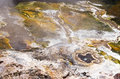 Hot spring natural and steam in the national park rotorua north island new zealand Stock Image