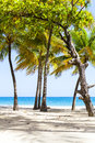 Hot tropical beach with blue sky Stock Images