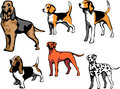 Hounds hound dog breeds color illustrations Stock Photo
