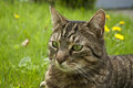 House cat portrait in spring grass Stock Photography