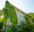 House Covered With Ivy.