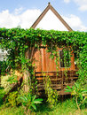 House covered with ivy Royalty Free Stock Photo