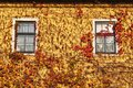 House covered by leves in autumn Royalty Free Stock Images