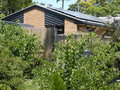 House cute resting on its favourite eucalyptus tree no hard work here maybe asleep Royalty Free Stock Photos