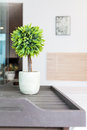 House decoration details white pot with small tree Royalty Free Stock Photo