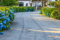 House driveway blue flowers a gravel lined with a hydrangea flower garden leading to a luxury estate Royalty Free Stock Photo