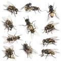 11 House flies Royalty Free Stock Photo