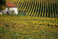 House in the heart of the vineyards Royalty Free Stock Photos