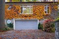 House with ivy in fall Royalty Free Stock Photo
