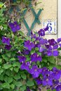 House number purple flowers a photograph showing the beautiful ceramic plate of an old french with pretty bright climbing Stock Photo