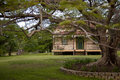 House old and old jacaranda tree an timber at riverview queensland australia surrounded by green grass an Royalty Free Stock Photo