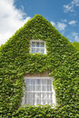 House overgrown with green ivy completely Stock Photography