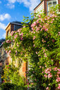 A house with pink climbing roses Royalty Free Stock Photo