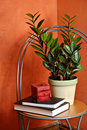 House Plant, Candle and Books Stock Image