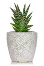 House plant in a ceramic pot on white background Stock Image