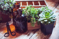 House plants and bottles green succulents old wooden box brown vintage glass on a wooden board home gardening decor rustic Stock Photo