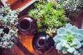 House plants and bottles green succulents old wooden box brown vintage glass on a wooden board home gardening decor rustic Royalty Free Stock Images