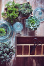 House plants green succulents old wooden box and blue vintage glass bottles on a wooden board home gardening and decorating rustic Stock Photo