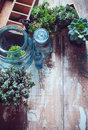 House plants green succulents old wooden box and blue vintage glass bottles on a wooden board home gardening and decorating rustic Royalty Free Stock Image