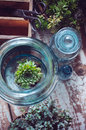 House plants green succulents old wooden box and blue vintage glass bottles on a wooden board home gardening and decorating rustic Stock Photos