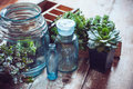 House plants green succulents old wooden box and blue vintage glass bottles on a wooden board home gardening and decorating rustic Stock Images