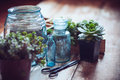 House plants green succulents old wooden box and blue vintage glass bottles on a wooden board home gardening and decorating rustic Stock Image