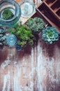 House plants green succulents old wooden box and blue vintage glass bottles on a wooden board home gardening and decorating rustic Stock Photography